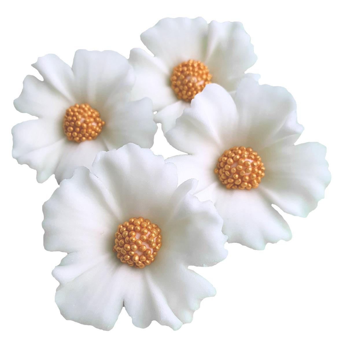 Zuckerblumen Kornblume 4 Stück - Weiss