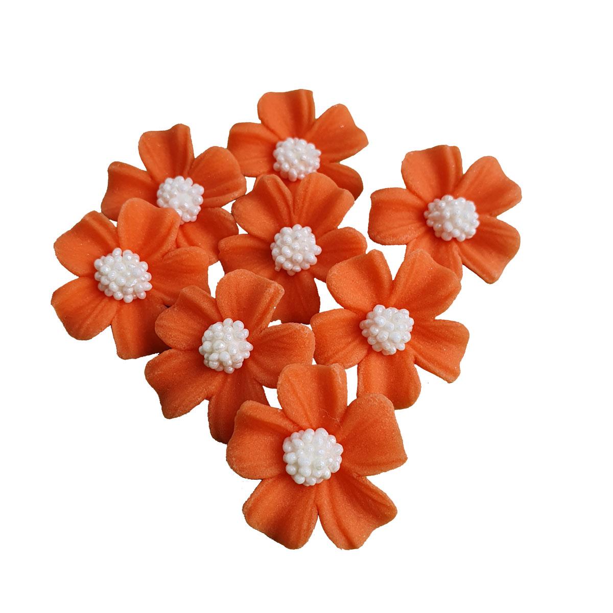 Zuckerblumen Vergissmeinnicht 8 Stück - Orange