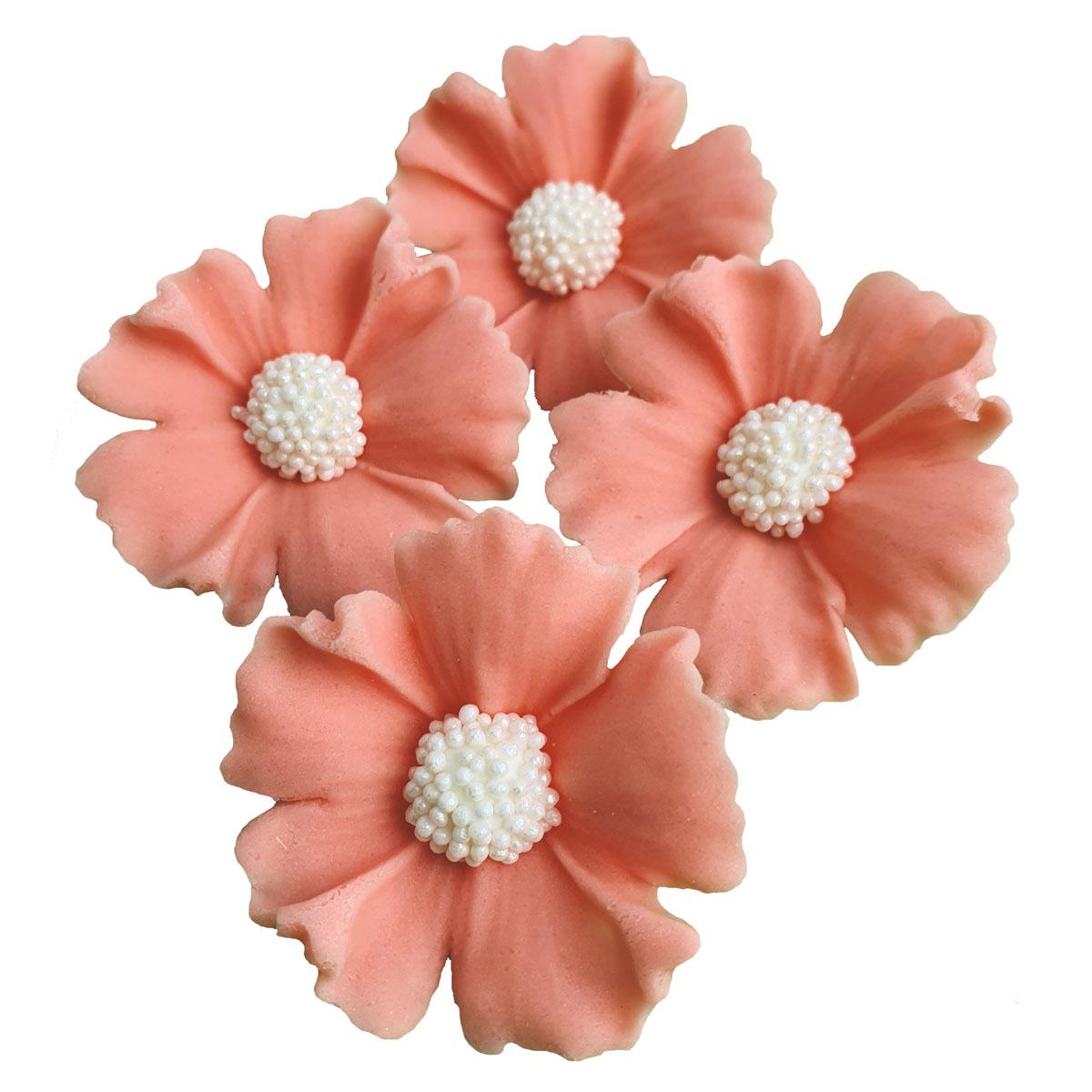 Zuckerblumen Kornblume 4 Stück - Lachsfarbe